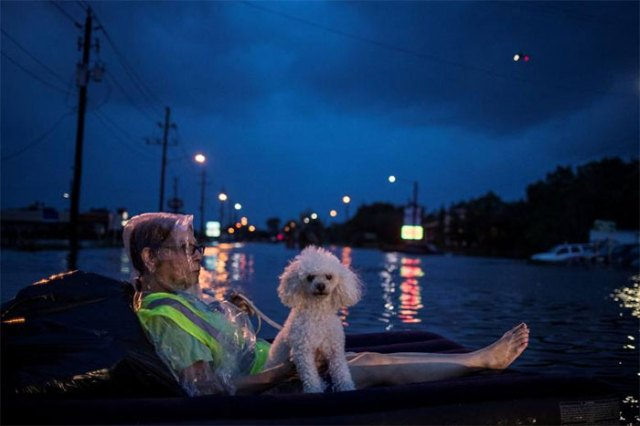 A Rescue Helicopter Hovers In The Background As An Elderly Woman And Her Poodle Use An Air Mattress To Float Above Flood Waters From Tropical Storm Harvey While Waiting To Be Rescued From Scarsdale Boulevard In Houston, Texas