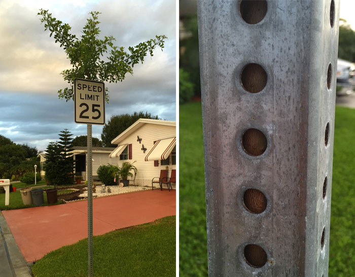 I Found A Tree Growing Through Speed Limit Sign