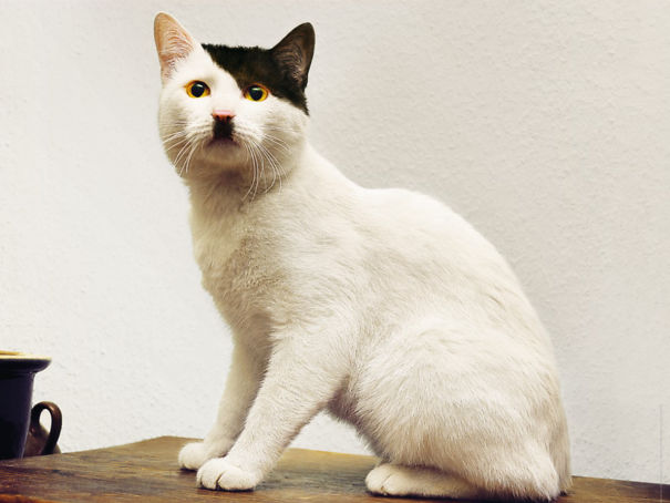 A Hitler Cat Look-Alike