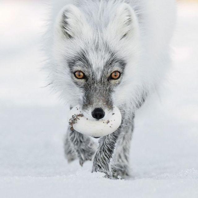 Arctic Treasure By Sergey Gorshkov, Russia