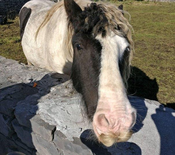 Cavallo Con Bacche