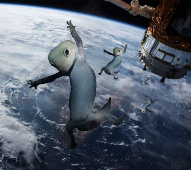 Space Geckos