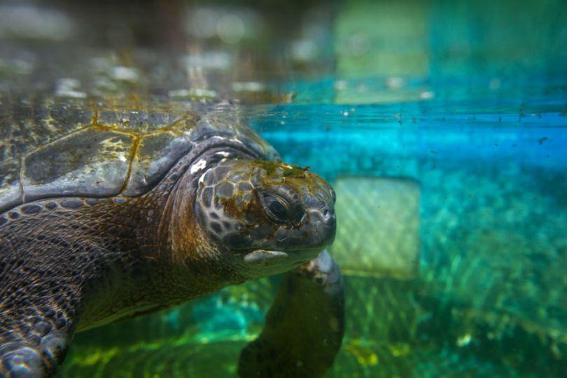 IMG 6694 Edit 59f08e391600f  880 - Homem especializa-se em fotografar resgate de tartarugas