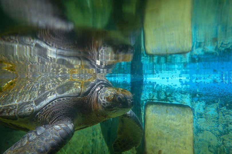 IMG 9070 Edit 59f08ce5d46b7  880 - Homem especializa-se em fotografar resgate de tartarugas