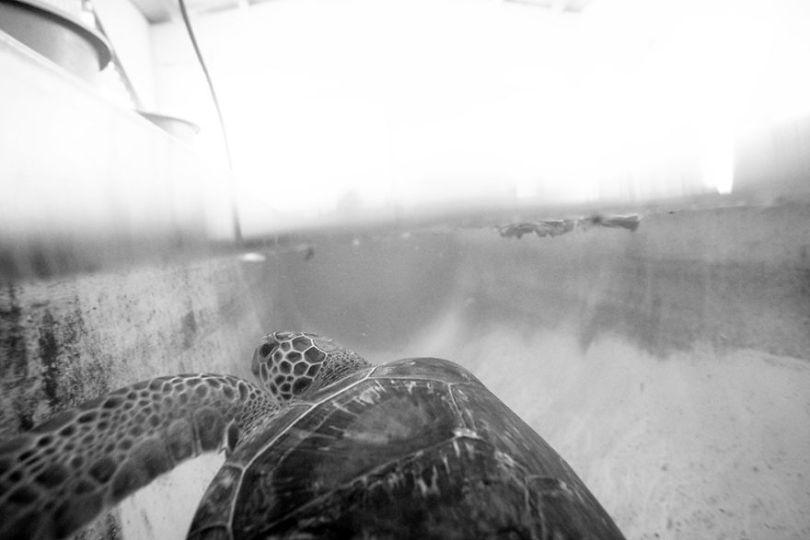 IMG 9299 Edit 59f08cfd80f56  880 - Homem especializa-se em fotografar resgate de tartarugas