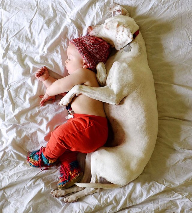 abused-rescue-dog-love-child-nora-elizabeth-spence-31