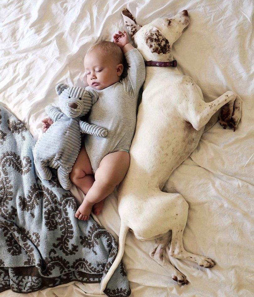 abusado-salvamento-cão-amor-criança-nora-elizabeth-spence-37