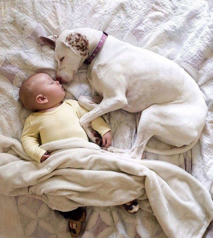 abused rescue dog love child nora elizabeth spence 40 - O melhor amigo do homem