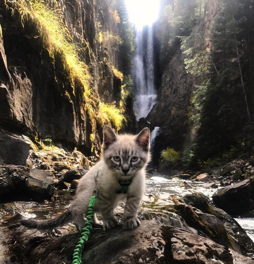 Gato y perro viajeros