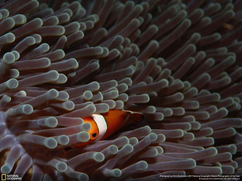 CHRIS BACHMANN 5a0339b5038fc  880 - 27 finalistas da National Geographic 2017 - categoria Natureza