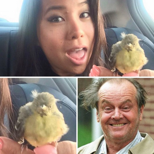 My Uber Had A Bird In His Car Who Looked Just Like Jack Nicholson
