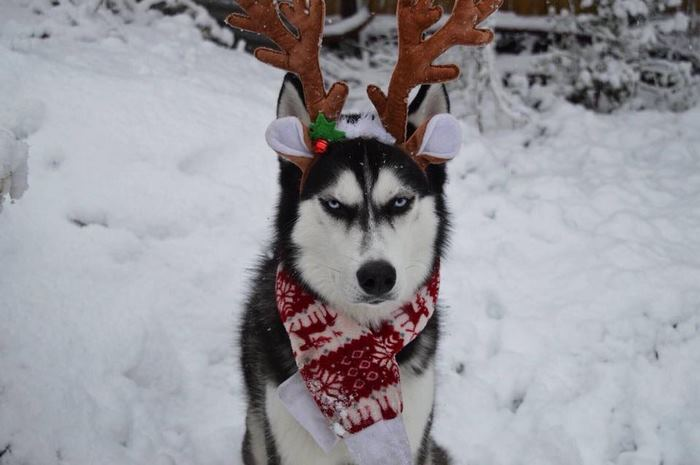 Humans Attempt To Do A Christmas Card Photoshoot With