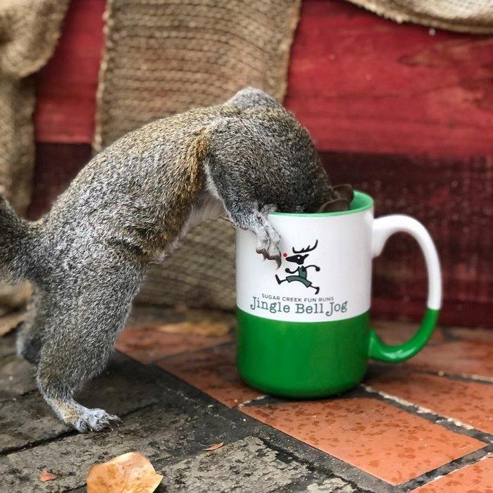 squirrel-come-back-save-family-bella-brantley-harrison-3