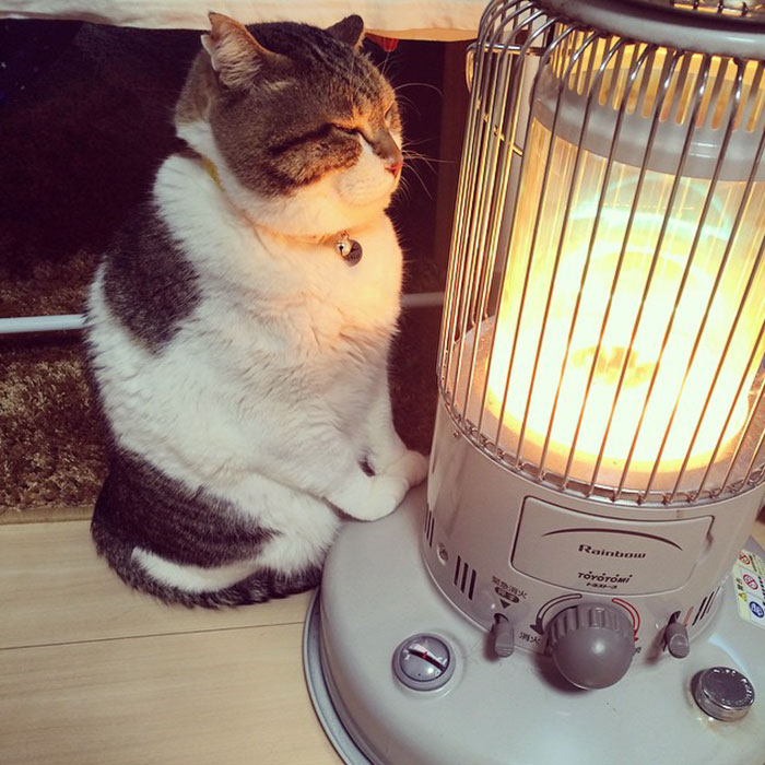 cat-heater-busao-tanryug-1-5a6af13960127__700 Hilarious Photos Of Cat Falling In Love With A Heater During Cold Weather Will Make Your Day Design Random