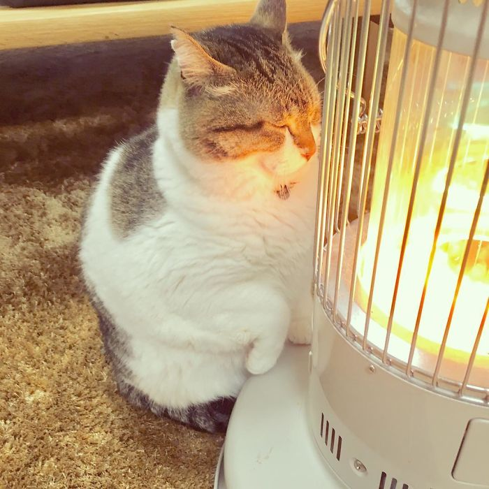 cat-heater-busao-tanryug-8-5a6aeeedc8982__700 Hilarious Photos Of Cat Falling In Love With A Heater During Cold Weather Will Make Your Day Design Random