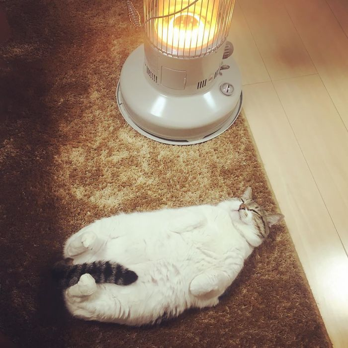 cat-heater-busao-tanryug-9-5a6aeeefaf276__700 Hilarious Photos Of Cat Falling In Love With A Heater During Cold Weather Will Make Your Day Design Random