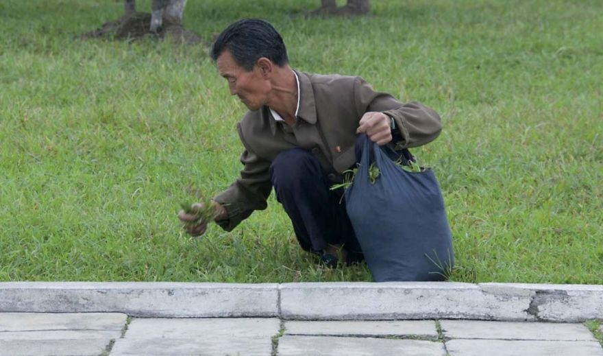 This Kind Of Picture Is Widespread In The West. The Caption Often Explains That North Koreans Eat Grass From The Park. The Guides Get Furious If You Take It
