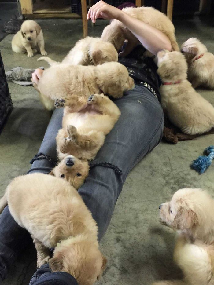 My Friend Picking Out A Golden Retriever Puppy