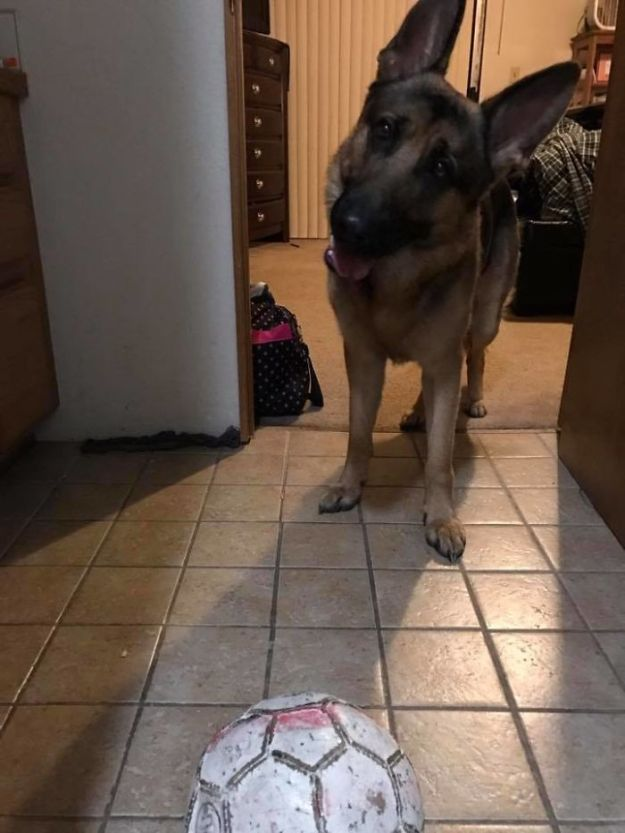 Dog-hero-almost-loses-his-life-by-saving-his-owner-from-criminals-5a936e182827f__700 Brave Dog Gets Shot While Protecting His 16-Year-Old Owner From Armed Intruders Design Random