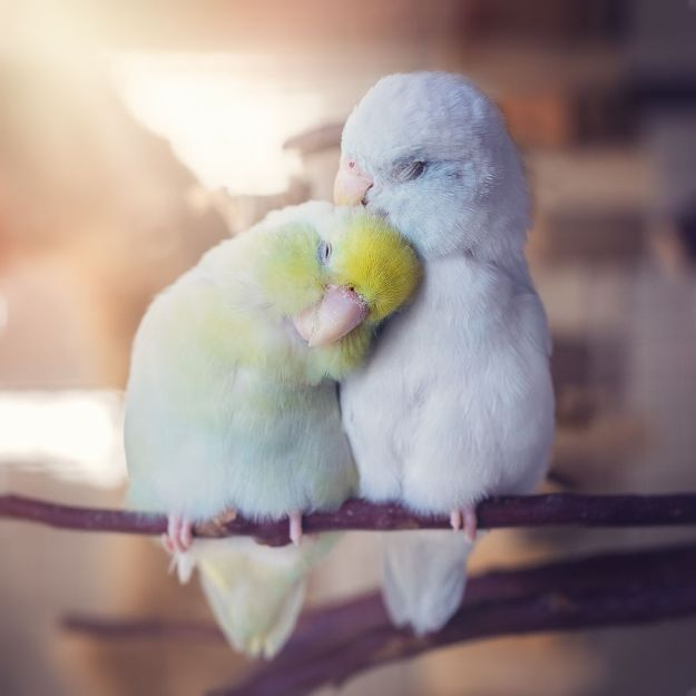 Z1A0407-Edit-Edit-copy-5a832b396b025__880 I Document A Storybook Love Between My Pastel Parrotlets, And The Result Will Melt Your Heart Design Random