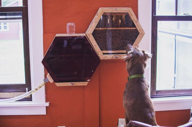 indoors-outdoors-bee-hives-beecosystem-1-5a868c430c8ef__700 Genius Company Installs Beehives In Your Living Room, And Here's How It Works Design Random