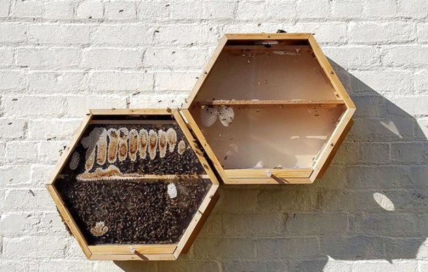 indoors-outdoors-bee-hives-beecosystem-12-5a868c5725388__700 Genius Company Installs Beehives In Your Living Room, And Here's How It Works Design Random