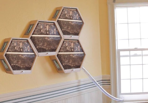 indoors-outdoors-bee-hives-beecosystem-5-5a868c4ae7ad0__700 Genius Company Installs Beehives In Your Living Room, And Here's How It Works Design Random