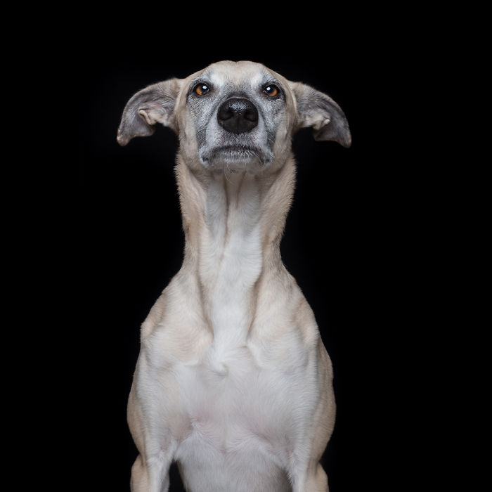20170117-SnobbyScout-5ab95d4c2ab2a__700 I Photograph Dogs To Show How Unique Every Single Of Them Is Design Photography Random