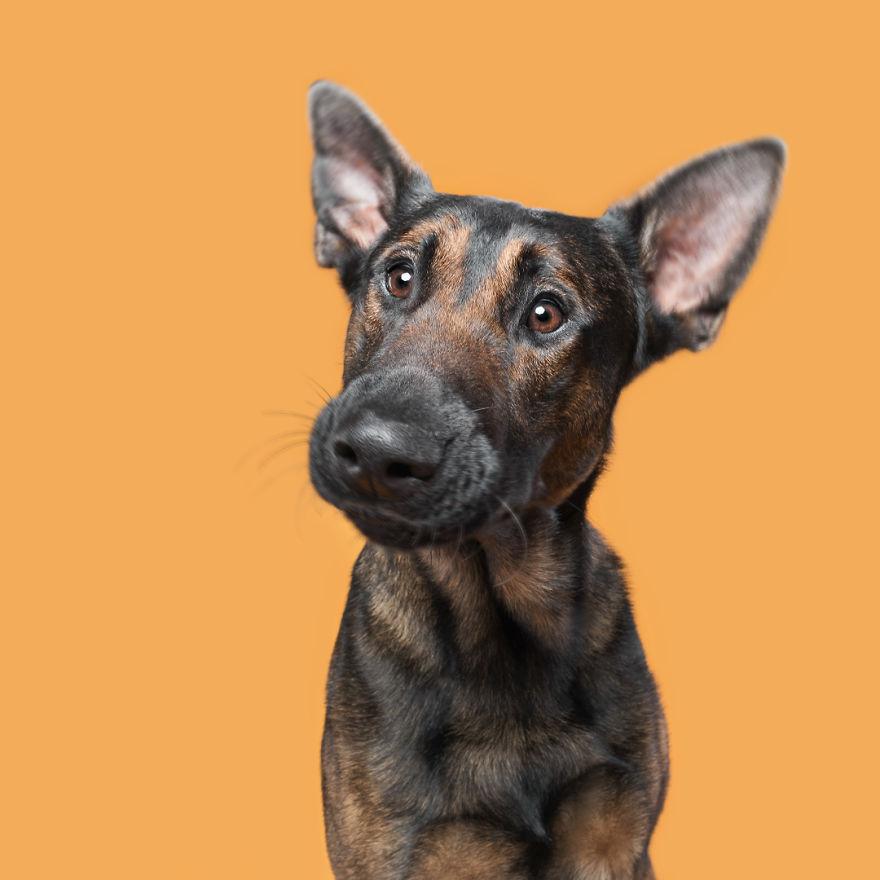 curiosas fotos de perros Confused Kiboyo