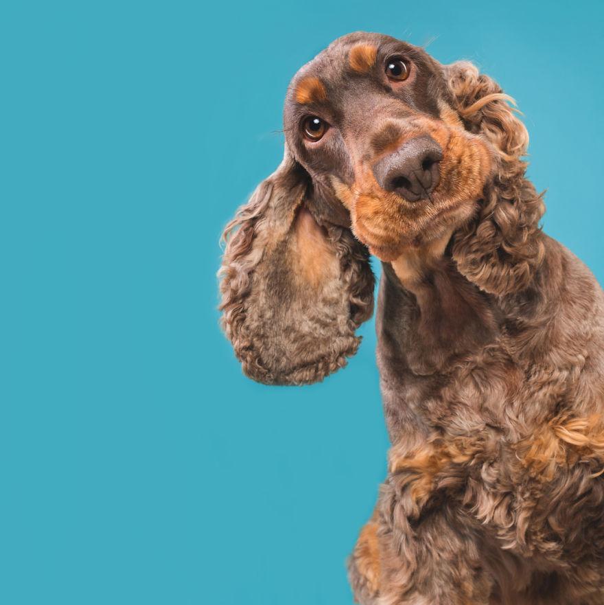curiosas fotos de perros Curious Chico