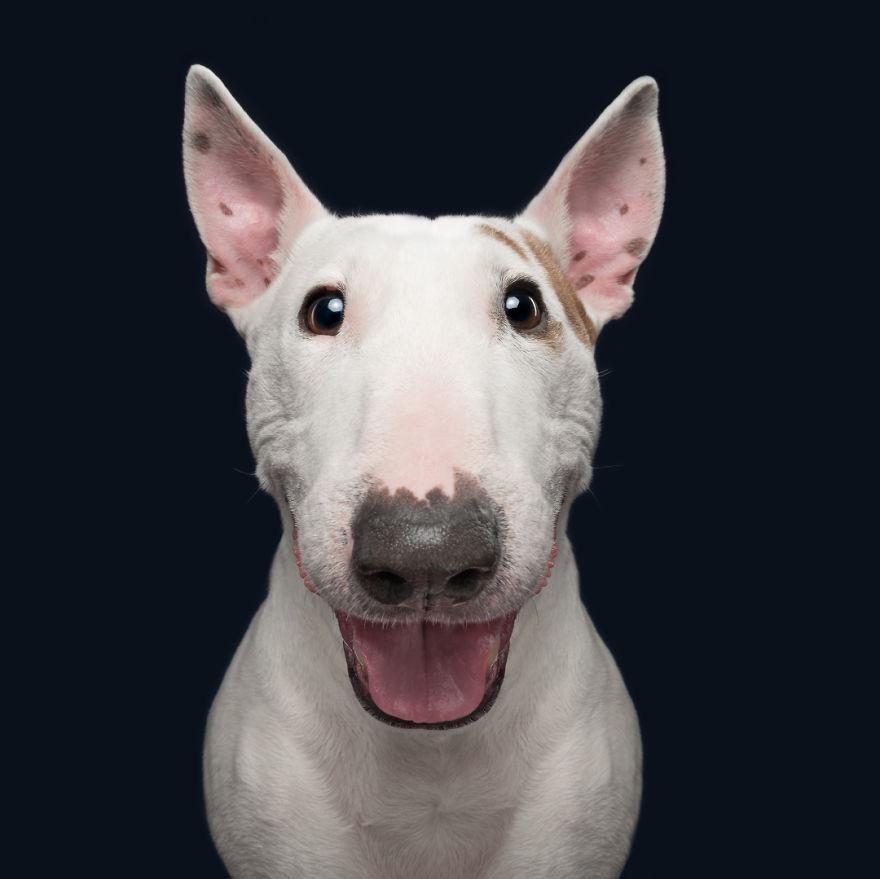 curiosas fotos de perros Happy Mailo