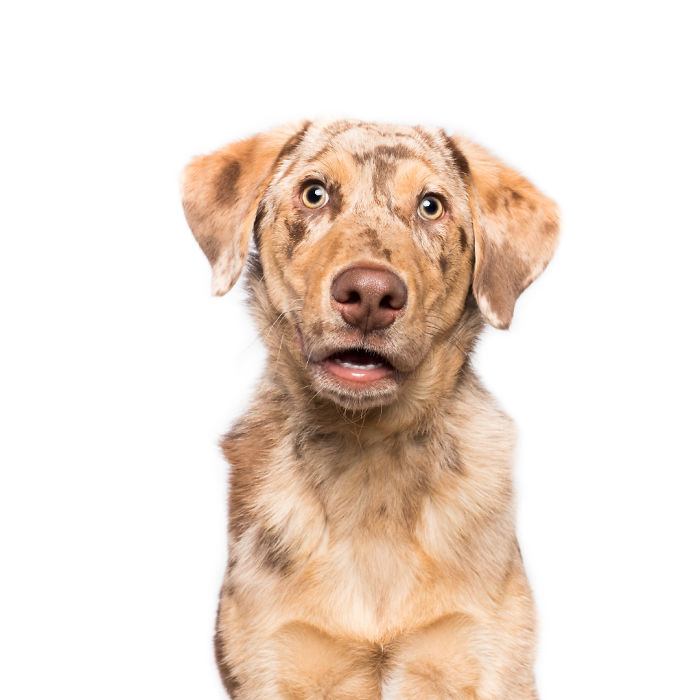20180221-FlabbergastedFinlay_web-5ab95da616da3__700 I Photograph Dogs To Show How Unique Every Single Of Them Is Design Photography Random