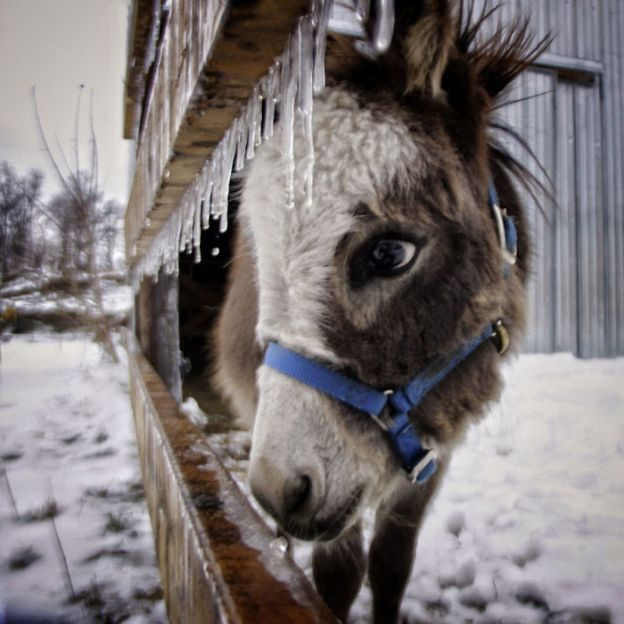 5a97fb0513fc6__700 These 25+ Cute Baby Donkeys Are Everything You Need To See Today Design Random
