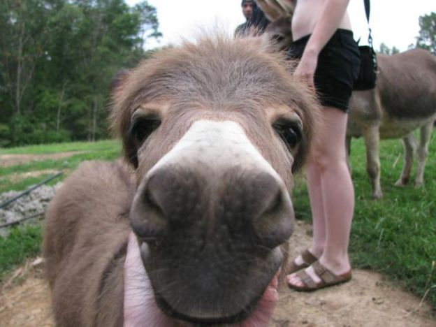 5a980c298590e_oQrSn__700 These 25+ Cute Baby Donkeys Are Everything You Need To See Today Design Random
