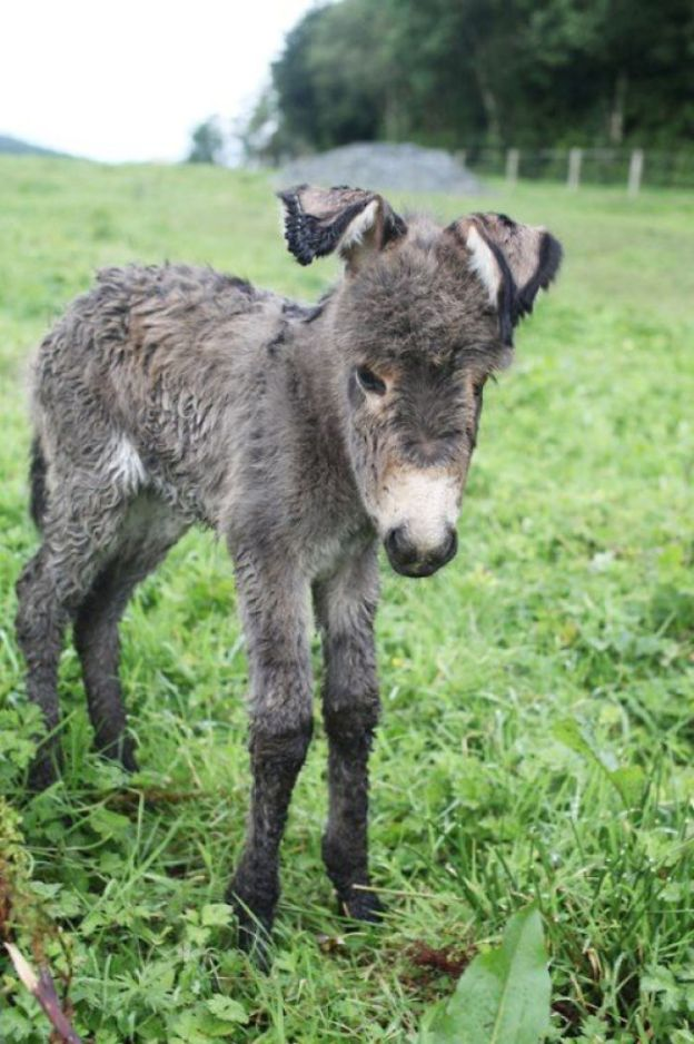 5aabe1d81c2bd_26907845_1678701275538890_2682835391722921865_n-png__700 These 25+ Cute Baby Donkeys Are Everything You Need To See Today Design Random