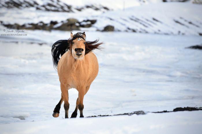 If Disney's Spirit: Stallion Of The Cimarron Moved To Norway