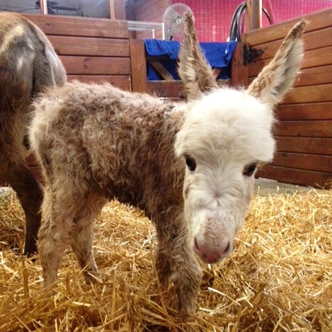 BeBVu6AnVCw These 25+ Cute Baby Donkeys Are Everything You Need To See Today Design Random