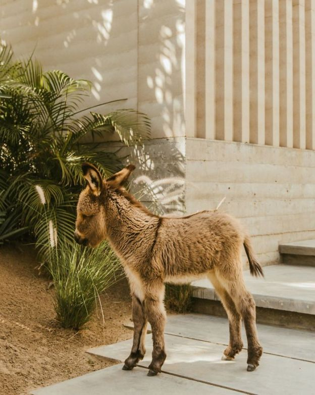 Bebwd_NBAgj-png__700 These 25+ Cute Baby Donkeys Are Everything You Need To See Today Design Random