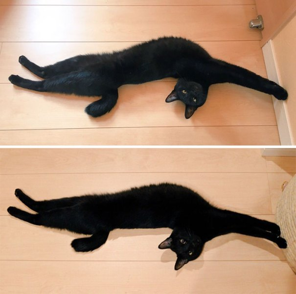 Stretched Cats