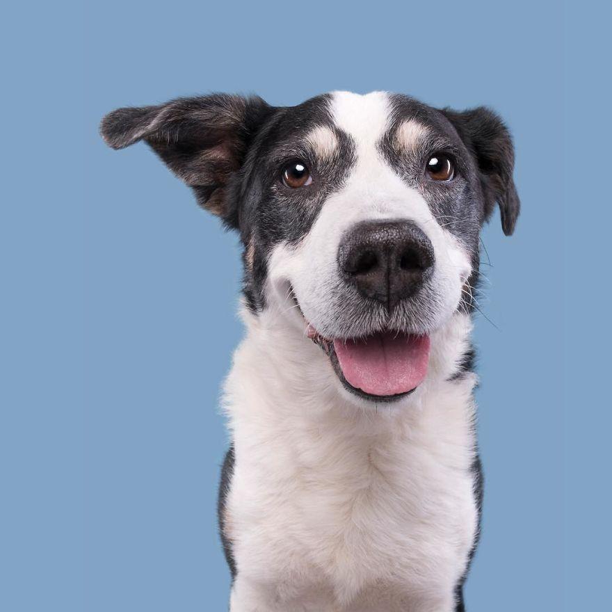 curiosas fotos de perros Smiling Will