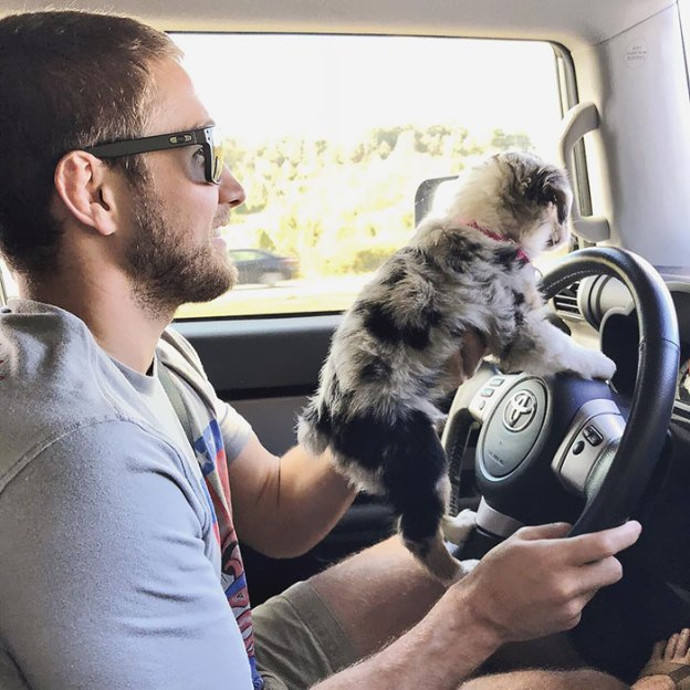 cute-autralian-shepherds-96-5aa29dcb67659__700 20+ Reasons Why Australian Shepherds Are The Best Dogs Design Random