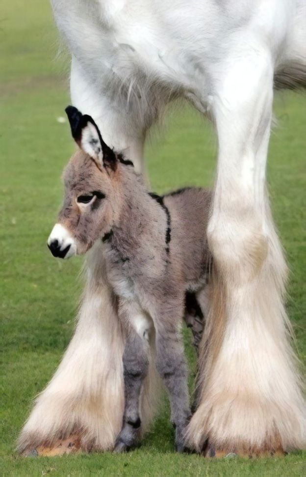 cute-miniature-baby-donkeys-111-5aabe5f1d7a37__700 These 25+ Cute Baby Donkeys Are Everything You Need To See Today Design Random