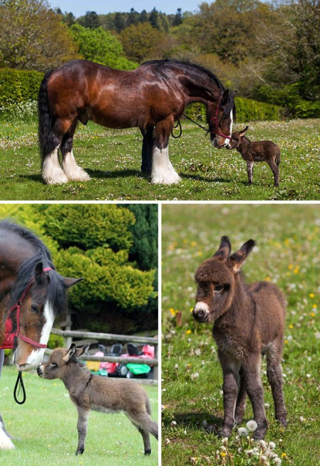 cute-miniature-baby-donkeys-25-5aaa657c11e51__700 These 25+ Cute Baby Donkeys Are Everything You Need To See Today Design Random