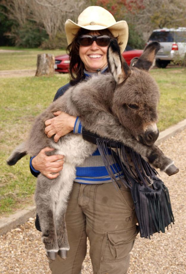 cute-miniature-baby-donkeys-31-5aaa855dc005d__700 These 25+ Cute Baby Donkeys Are Everything You Need To See Today Design Random