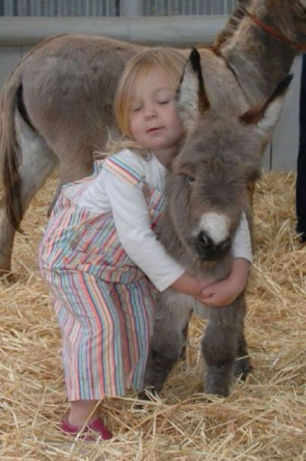 cute-miniature-baby-donkeys-35-5aaa8f7893899__700 These 25+ Cute Baby Donkeys Are Everything You Need To See Today Design Random