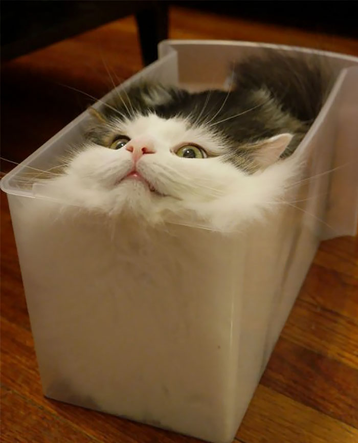 Update: Feline Continues To Seek Fully Liquid State