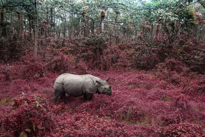 Rhino From Chitwan, Altered Images Finalist
