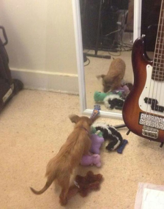Ha traído todos sus juguetes para que el perro del espejo juegue con ellos