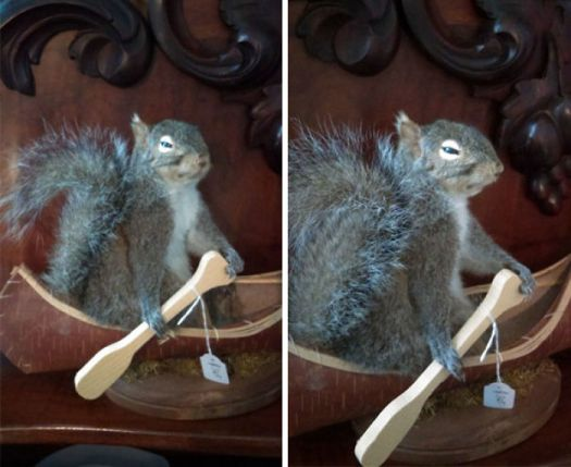When You're A Squirrel And Just Want To Store Nuts For The Winter And Provide For Your Family But Then You Die, Get Taxidermied And Somehow Make It Through Australian Customs Only To End Up Rowing A Tiny Boat For All Eternity In A Rural Victorian Op Shop