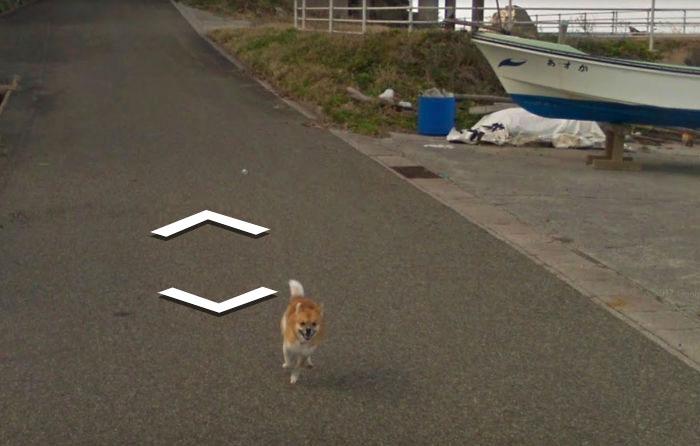 tiny-dog-follows-street-view-car-kagoshima-japan006